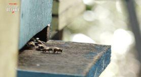 Miel de Guyane [une biodiversité de dingue]